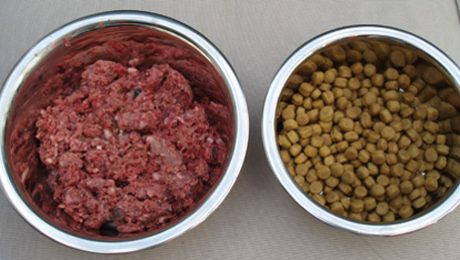 Image of Raw vs kibble