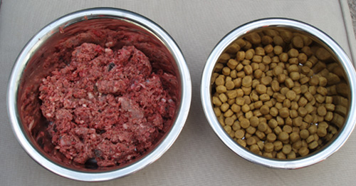 Raw Dog Food Cape Town